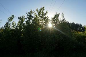 päike põõsas